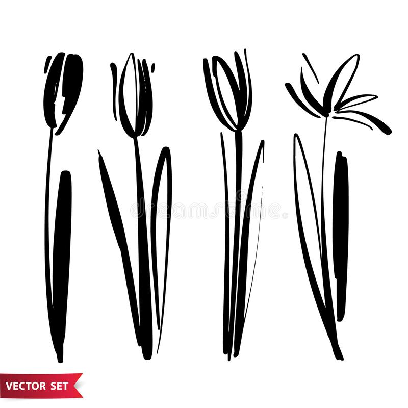 Vector set of ink drawing tulip flowers, monochrome artistic botanical illustration, isolated floral elements, hand. Drawn illustration. Hand drawn flowers set vector illustration