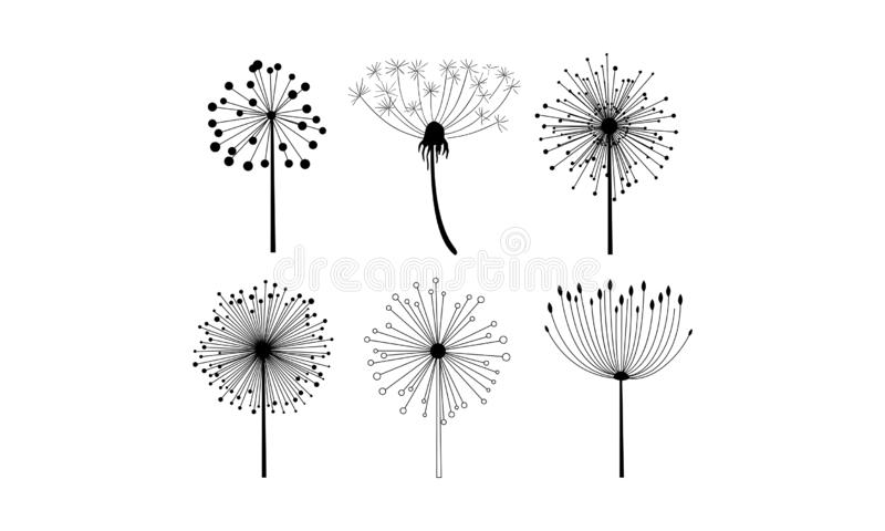 Vector set of 6 linear dandelion flowers with fluffy seeds. Floral theme. Decorative elements for postcard or notebook stock illustration