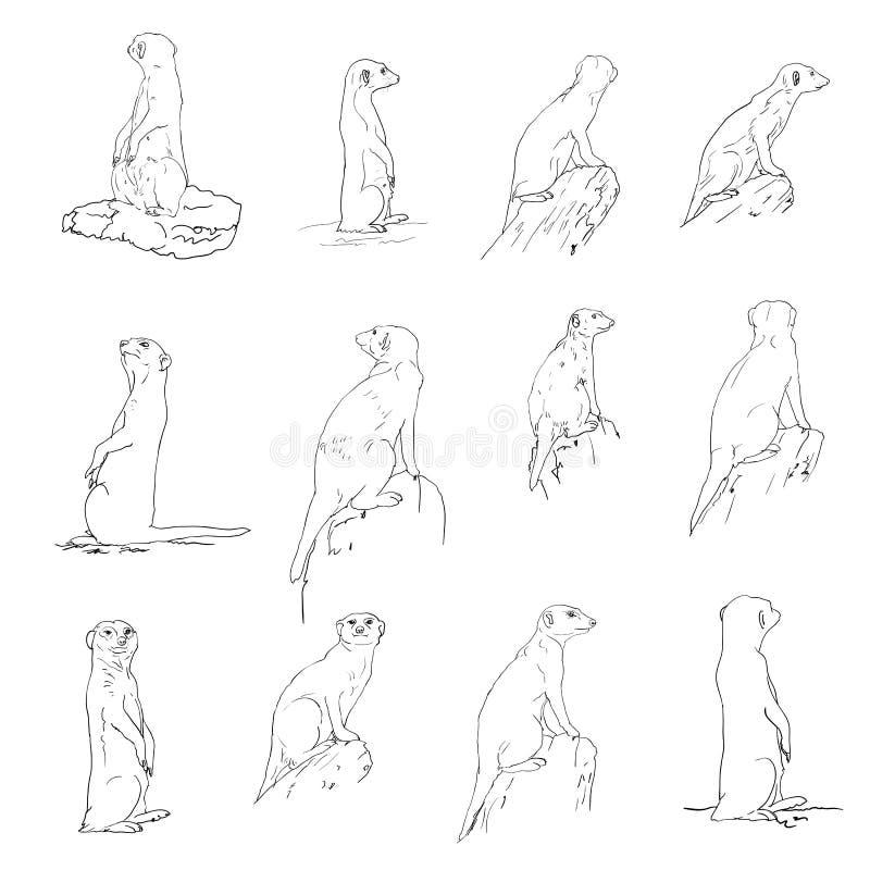 Download Meerkat stock vector. Illustration of alertness, fluffy - 30151077