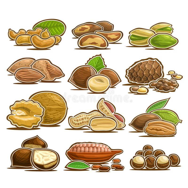 Vector set of Nuts. 12 cut out assorted heap of abstract hazel fruits for healthy nutrition, collection of isolated various piles of nut kernels in nutshell stock illustration