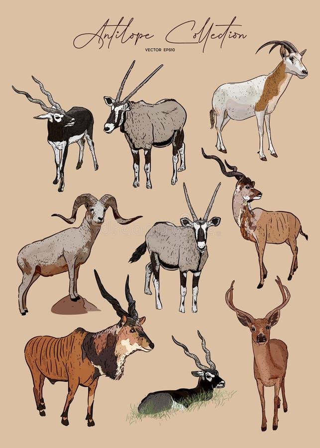 Free Vector Set Of Antelopes, Hand Drawn Sketch Of Animals Stock Photos - 164892773