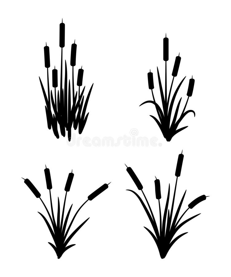 Free Vector Set Of Typhaceae Marsh Herb Stock Photography - 162616562
