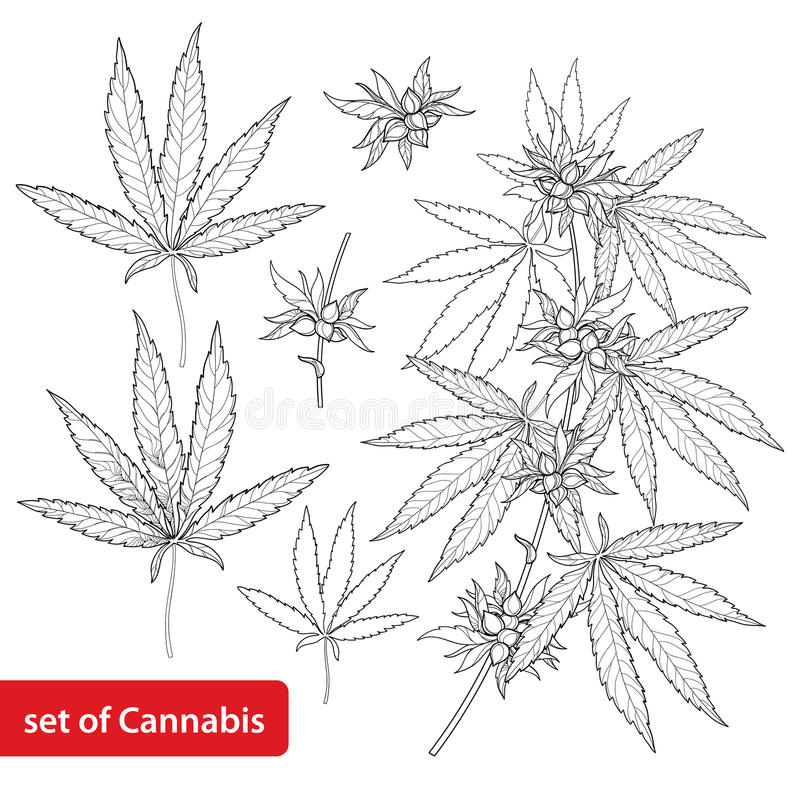 Vector set with outline Cannabis sativa or Cannabis indica or Marijuana. Branch, leaves and seed isolated on white background. royalty free illustration
