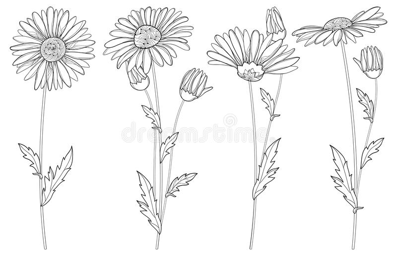 Vector set with outline Chamomile flowers, bud and leaf isolated on white background. Ornate Chamomiles in contour style. Vector set with outline Chamomile royalty free illustration