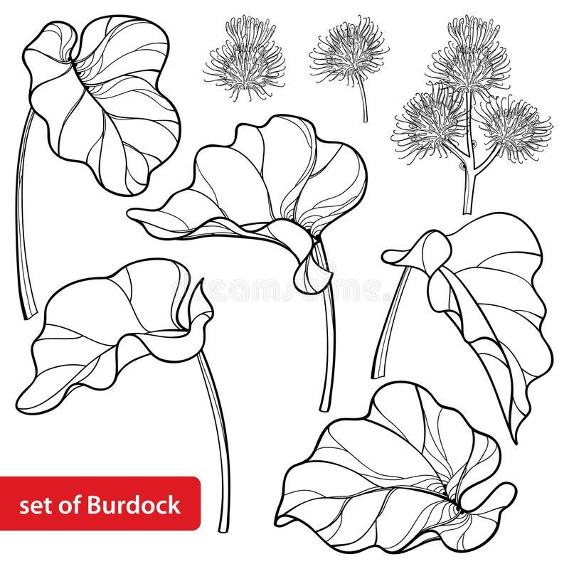 Vector set of outline greater Burdock or Arctium lappa, leaf and bur or seed in black isolated on white background. stock illustration
