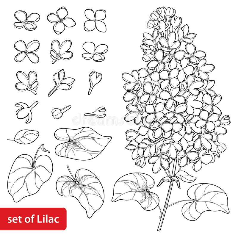 Vector set with outline Lilac or Syringa flower, ornate leaves and bunch in black isolated on white background. stock illustration