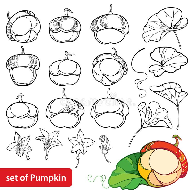 Vector set with outline Pumpkin with flower and ornate leaf in black isolated on white background. Contour Pumpkin vegetable. stock illustration