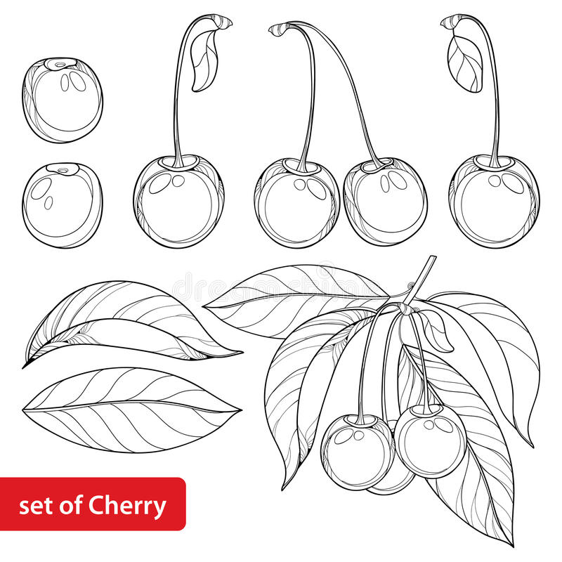 Vector set with outline ripe Cherry, bunch, berry and leaves on white background. Ornate floral elements with cherry. royalty free illustration