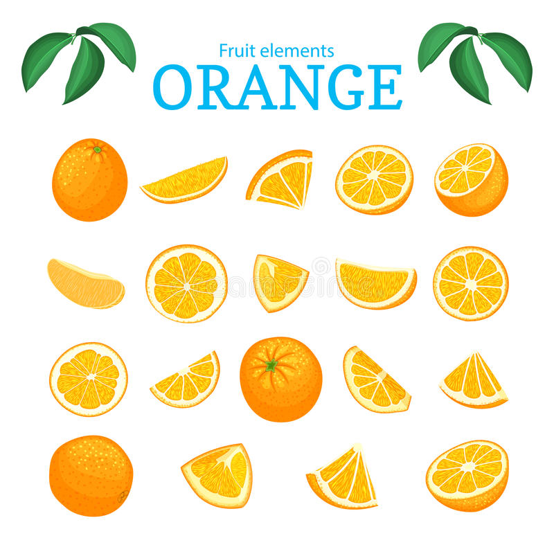 Vector set of ripe tropical orange fruits. Oranges peeled, piece of half slice leaf. Collection of delicious citrus vector illustration