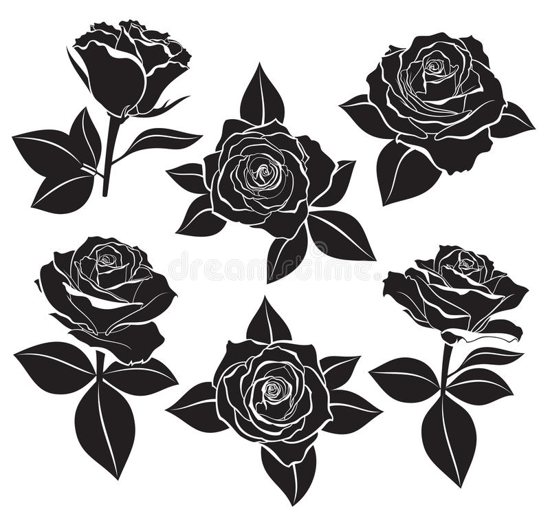 Vector set of Rose buds, stems and leaves with white contour line and silhouettes in black color. Vector illustration for design a stock illustration