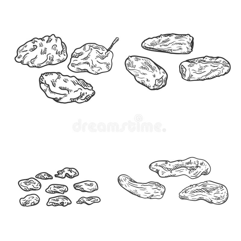 Vector Set of Sketch Dried Fruits royalty free illustration