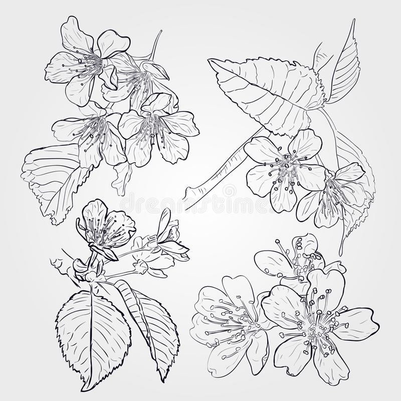 Vector set of spring branches isolated on white background. Blossoms, leaves, branches royalty free illustration