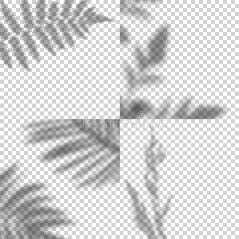 Vector Set of Transparent Shadows of Leaves. Decorative Design Elements. Creative Overlay Effect for Mockups. Vector Set of Transparent Shadows of Leaves stock illustration