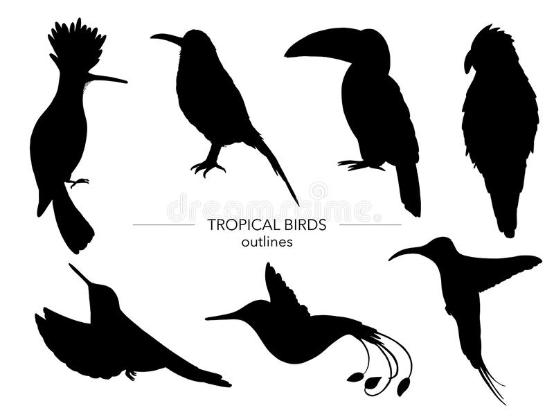 Vector set of tropical birds. Hand drawn black silhouettes of parrot,  paradise bird,  toucan,  hoopoe. Black and white collection of tropic animals stock illustration