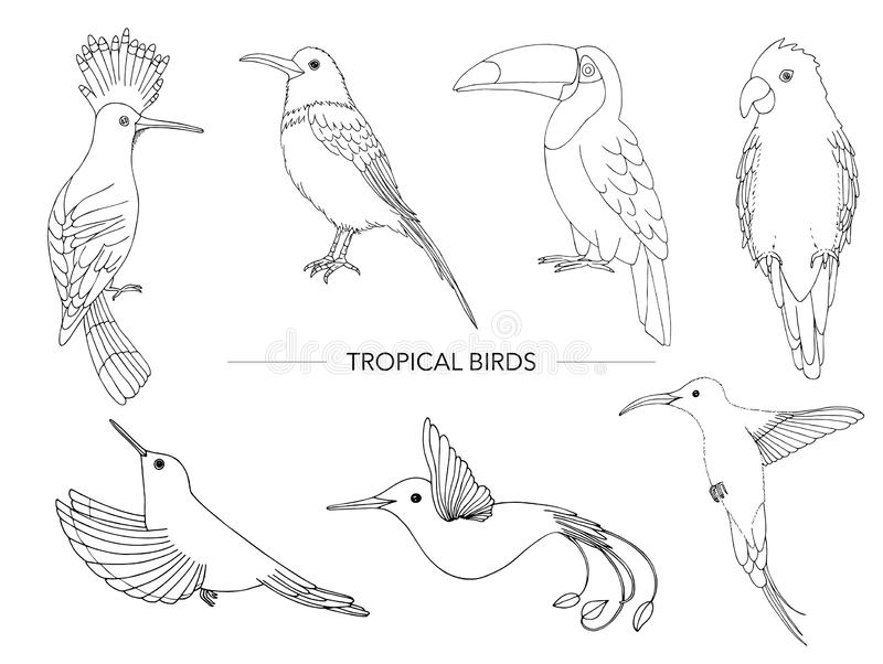 Vector set of tropical birds. royalty free illustration