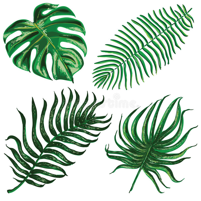 Vector set with tropical exotic leaves stock illustration
