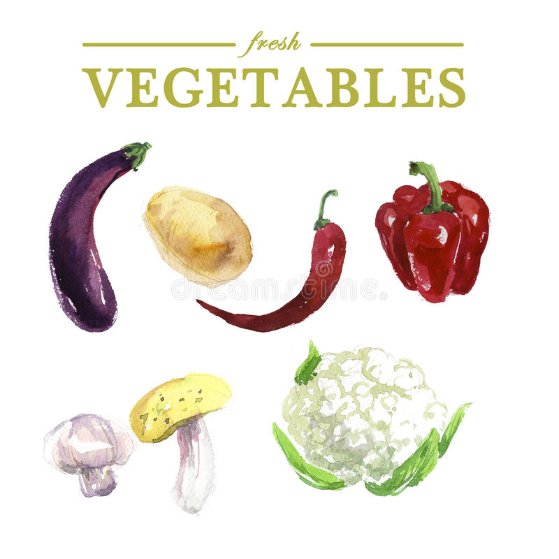 Vector set of watercolor fresh vegetables. On white background. Fresh food illustration. Good for magazine and book articles, poster design, restaurant menu stock illustration