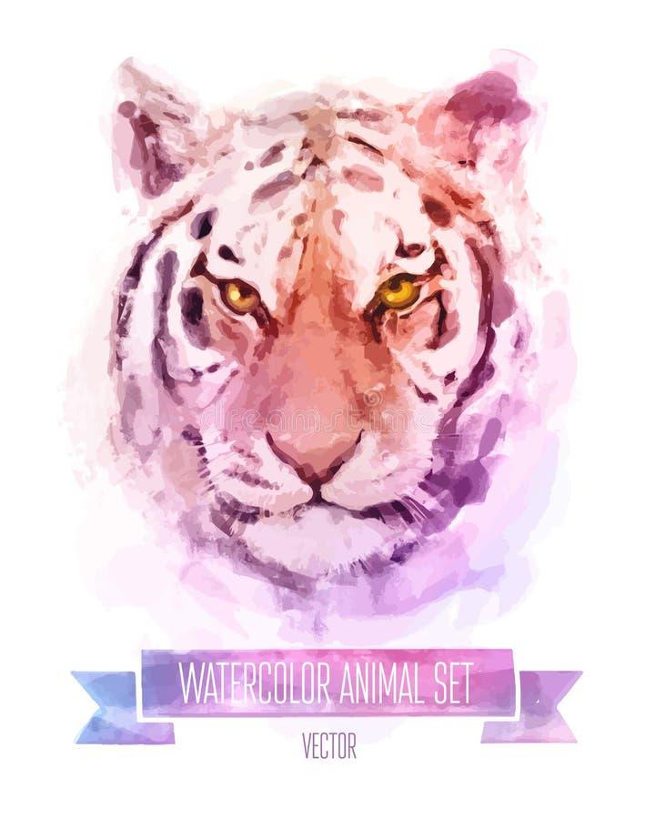 Vector set of watercolor illustrations. Cute tiger stock illustration