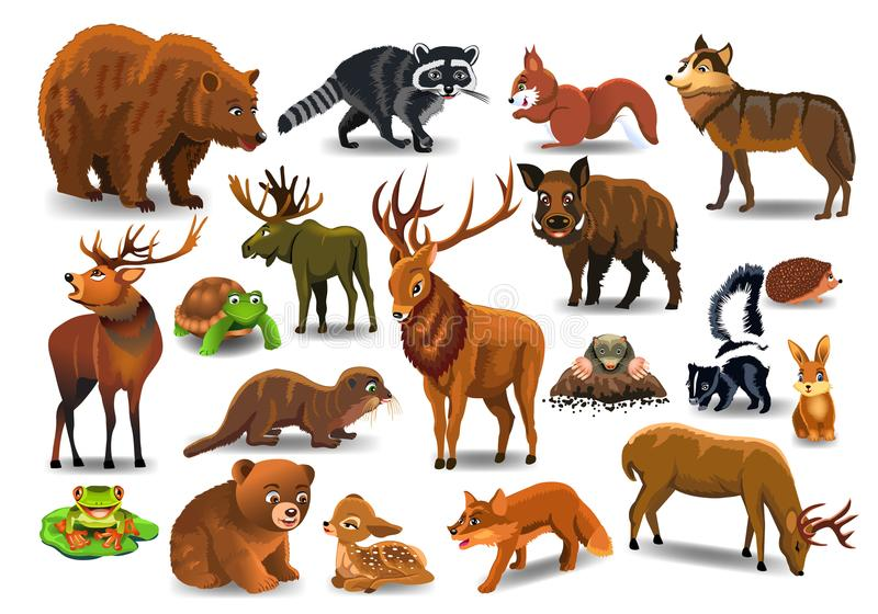 Vector set of wild forest animals like stag, bear, wolf, fox, tortoise. Isolated on a white background stock illustration