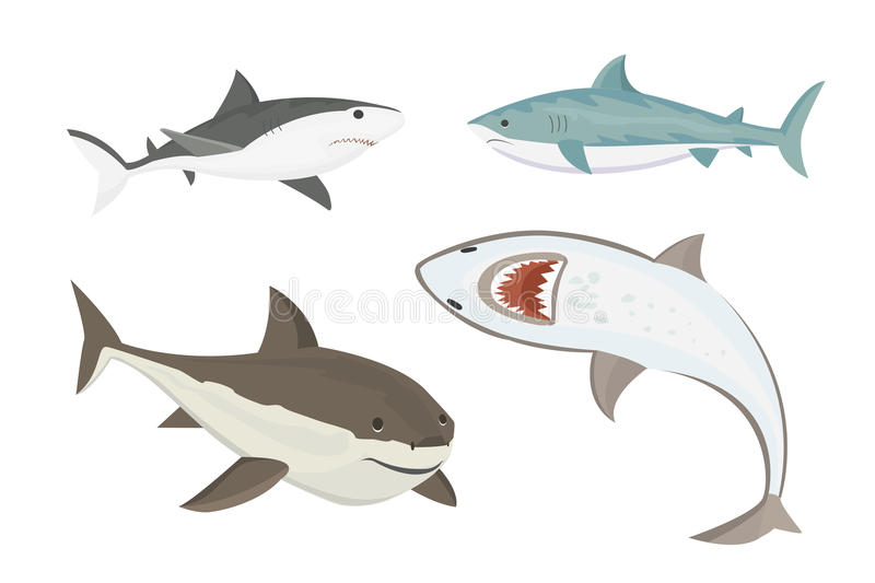 Vector shark character. Vector illustration toothy white swimming angry shark. Animal sea isolated character underwater cute marine wildlife mascot. Scary smile royalty free illustration