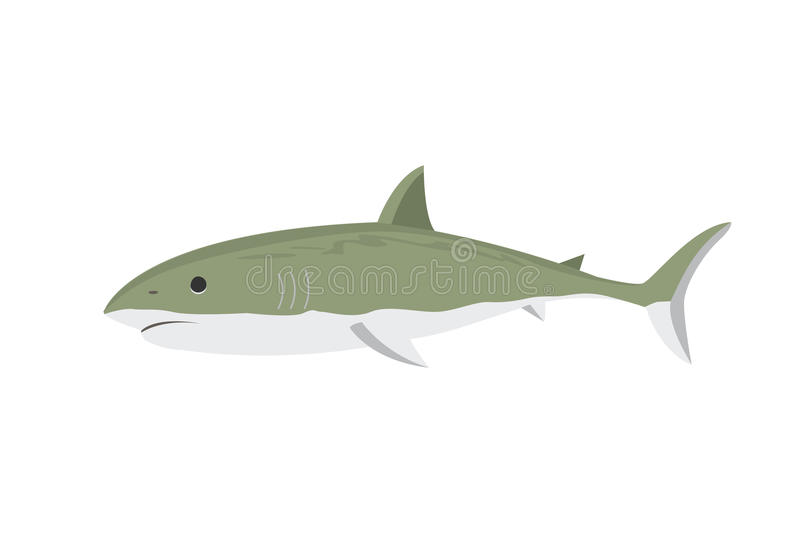 Vector shark character. Vector illustration toothy white swimming angry shark. Animal sea character underwater cute marine wildlife mascot. Scary smile cool royalty free illustration