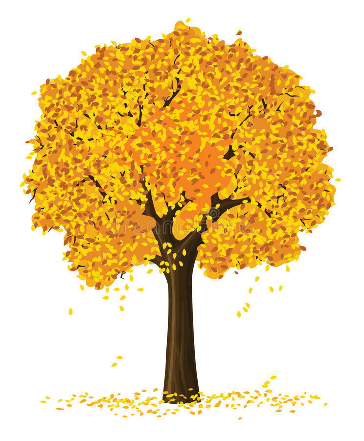 Vector silhouette autumn tree stock images