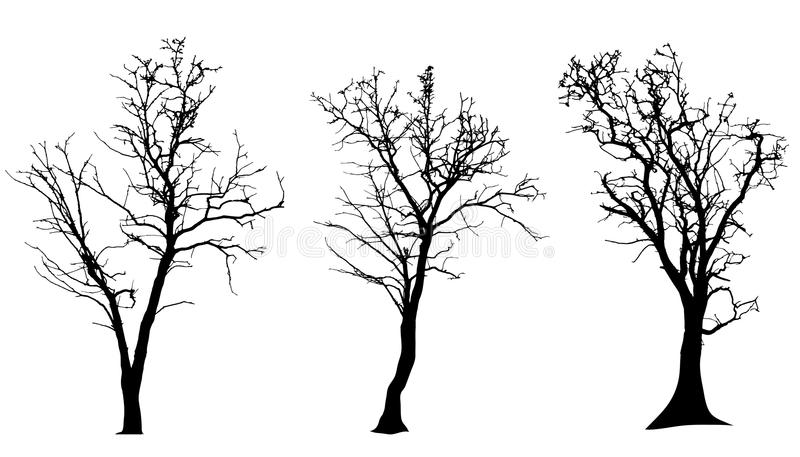 Vector silhouette of tree. royalty free illustration
