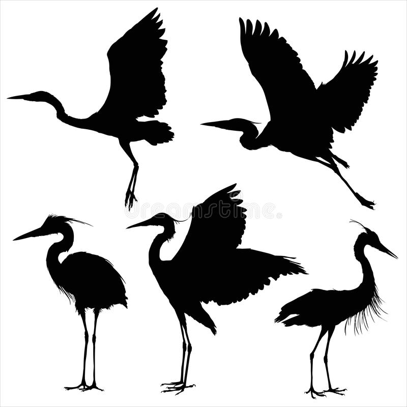 Free Vector Silhouettes Of Heron Stock Image - 51178491