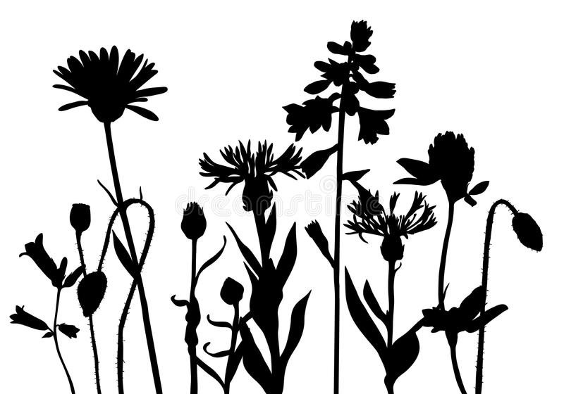 Vector Silhouettes Of Wild Flowers Stock Vector ...