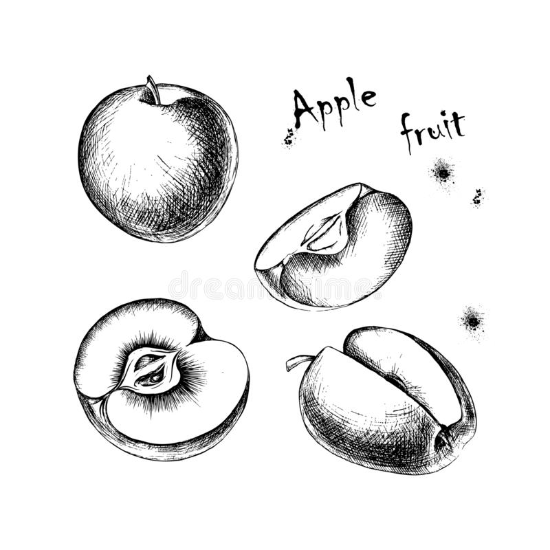 Vector sketch of apple fruit for design royalty free stock photography