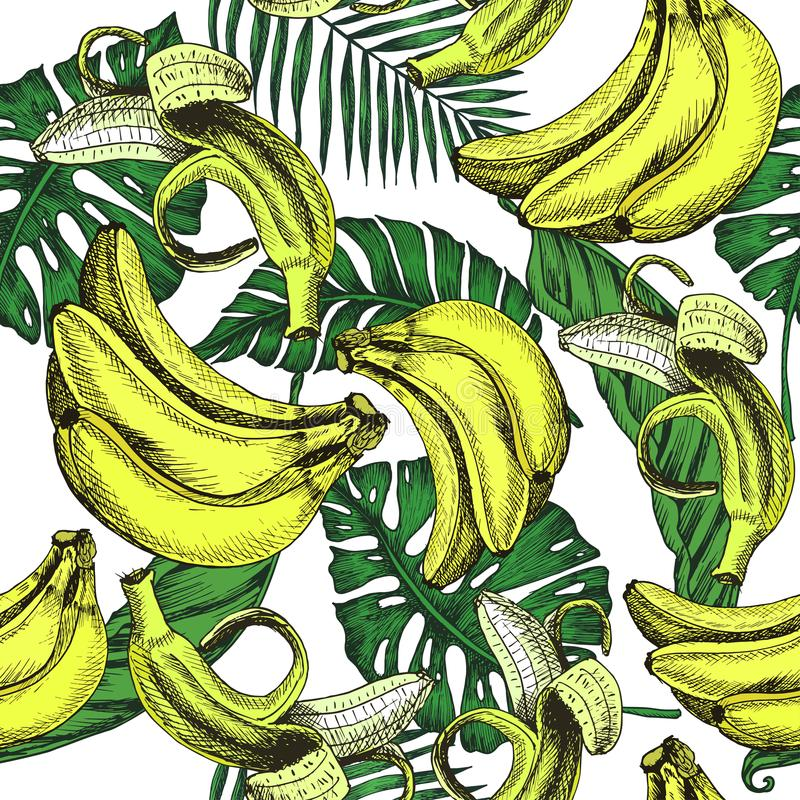 Vector sketch background fruit. Illustration banana and extic leafs pattern. royalty free illustration