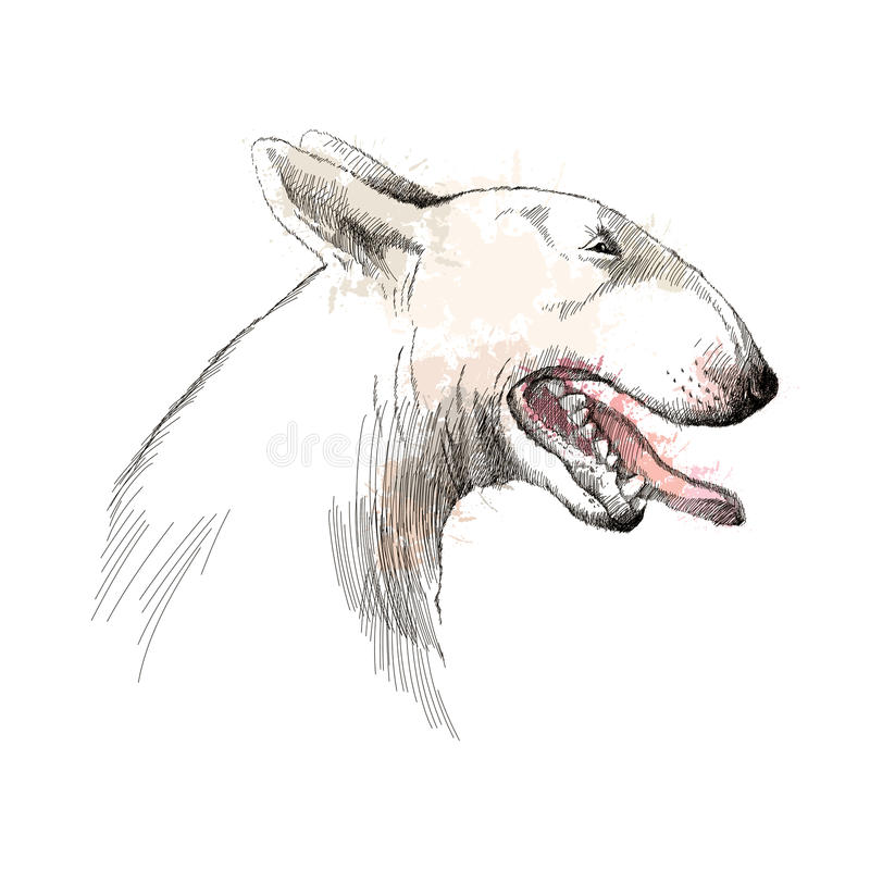 Vector sketch of Bull terrier dog head profile with open mouth on white background. Vector sketch of Bull terrier dog head profile with open mouth on white vector illustration