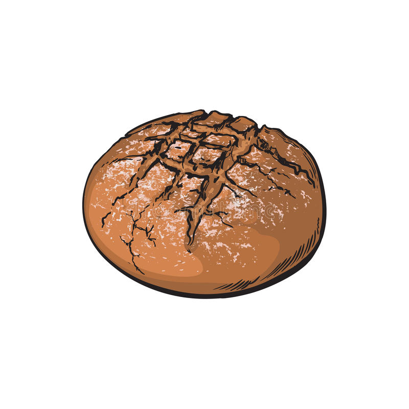 Vector sketch dark brown round bread isolated. Vector sketch fresh dark brown round rye bread loaf. Detailed hand drawn isolated illustration on a white vector illustration