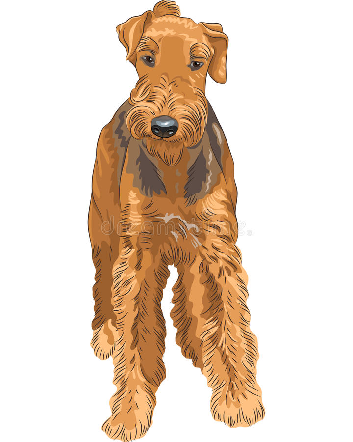 Download Vector Sketch Dog Airedale Terrier Breed Stock Vector - Image: 26187393