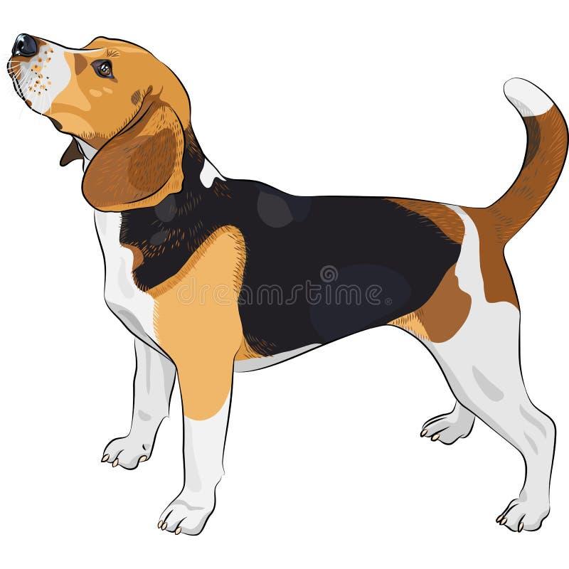 vector Sketch dog Beagle breed vector illustration
