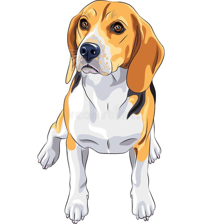 Vector Sketch dog Beagle breed sitting. Color sketch of the dog Beagle breed sitting stock illustration