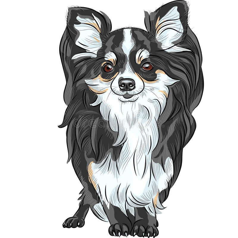 Free Vector Sketch Dog Chihuahua Breed Smiling Royalty Free Stock Photography - 36012287