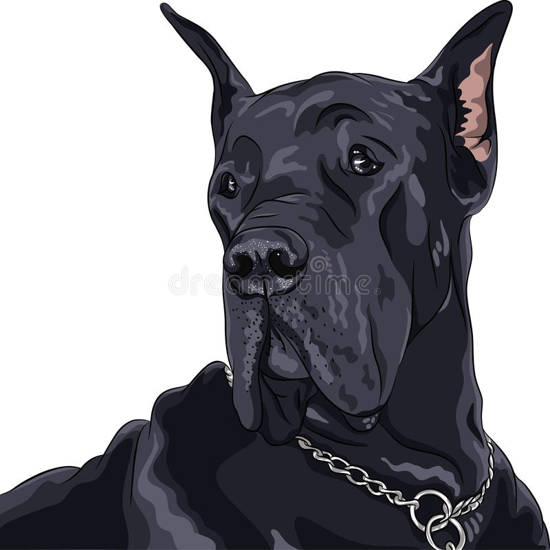 Vector Sketch Domestic Dog Black Great Dane Breed Stock Photography
