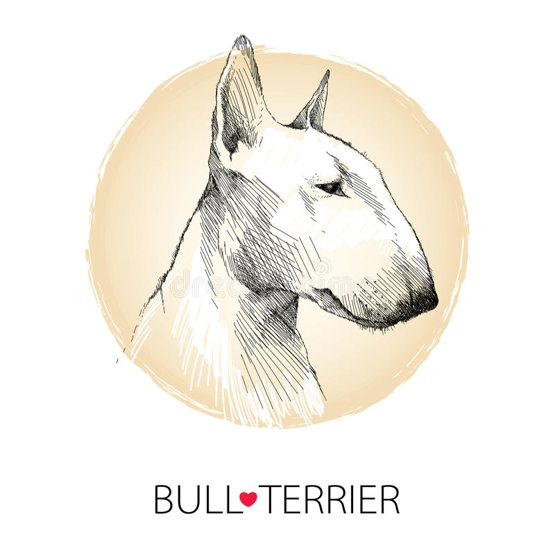 Vector sketch of English Bull terrier dog head profile on white background with beige round frame royalty free illustration