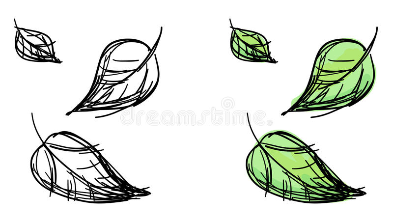 Vector sketch of falling leaves. Black and white and colorful green variants stock illustration