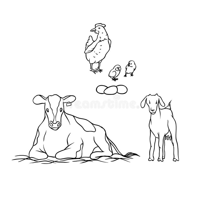 Vector sketch farm animal and birds. Young goat with udders cow spotted laying hens and chicks. Production of milk, eggs stock illustration