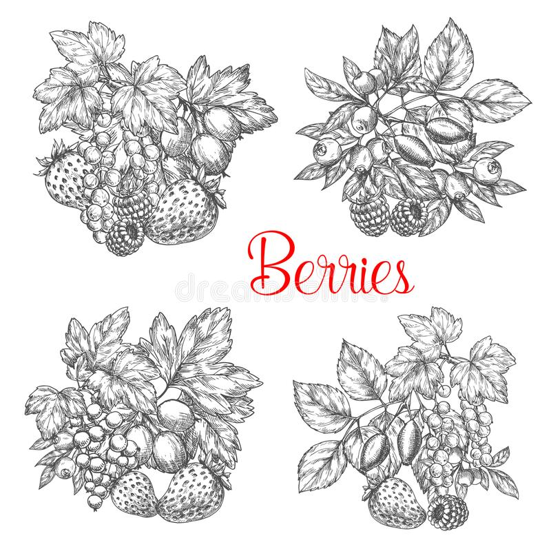 Vector sketch icons of fresh berries and fruits vector illustration