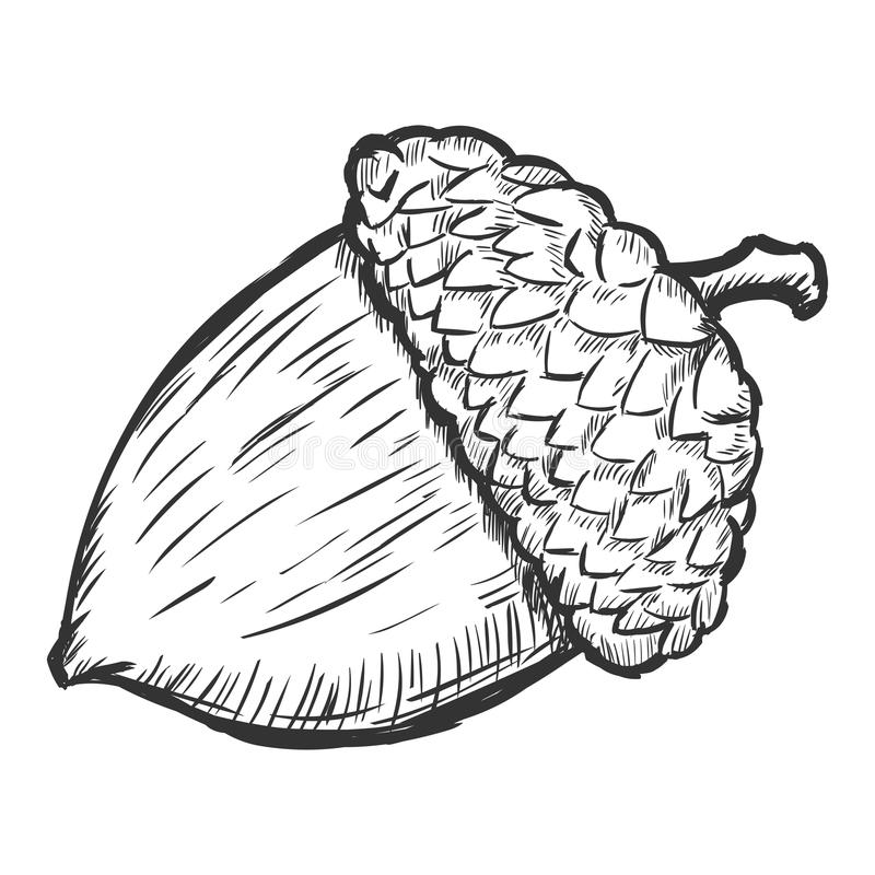 how to draw an acorn that is green