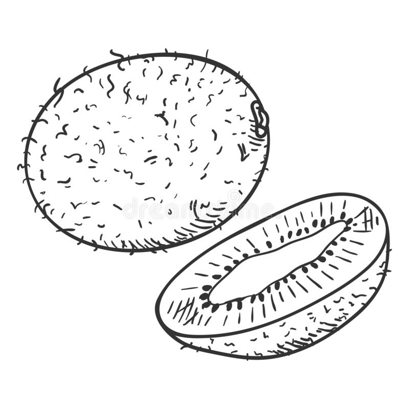 Free Vector Sketch Kiwi Fruit. Whole And Cut Royalty Free Stock Image - 141728586
