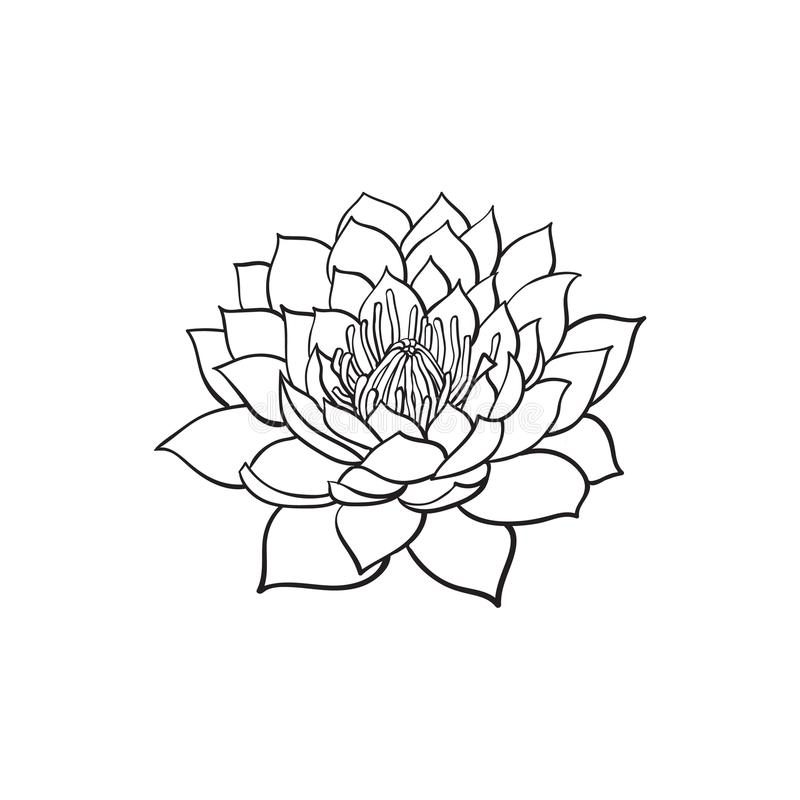 Vector sketch lotus flower blossom blooming stock vector download vector sketch lotus flower blossom blooming stock vector illustration of isolated oriental mightylinksfo