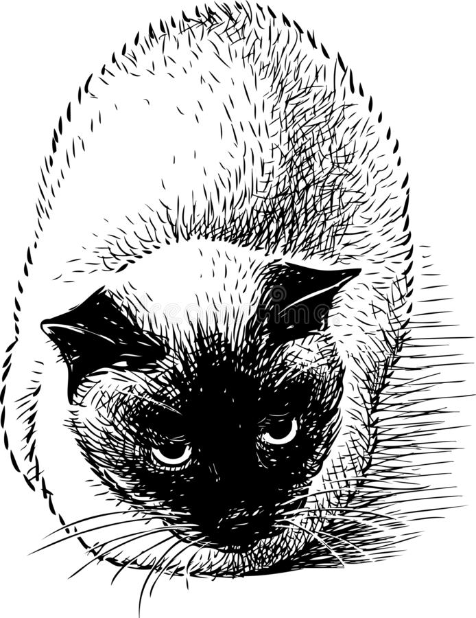 Hand drawing of a siamese cat royalty free illustration