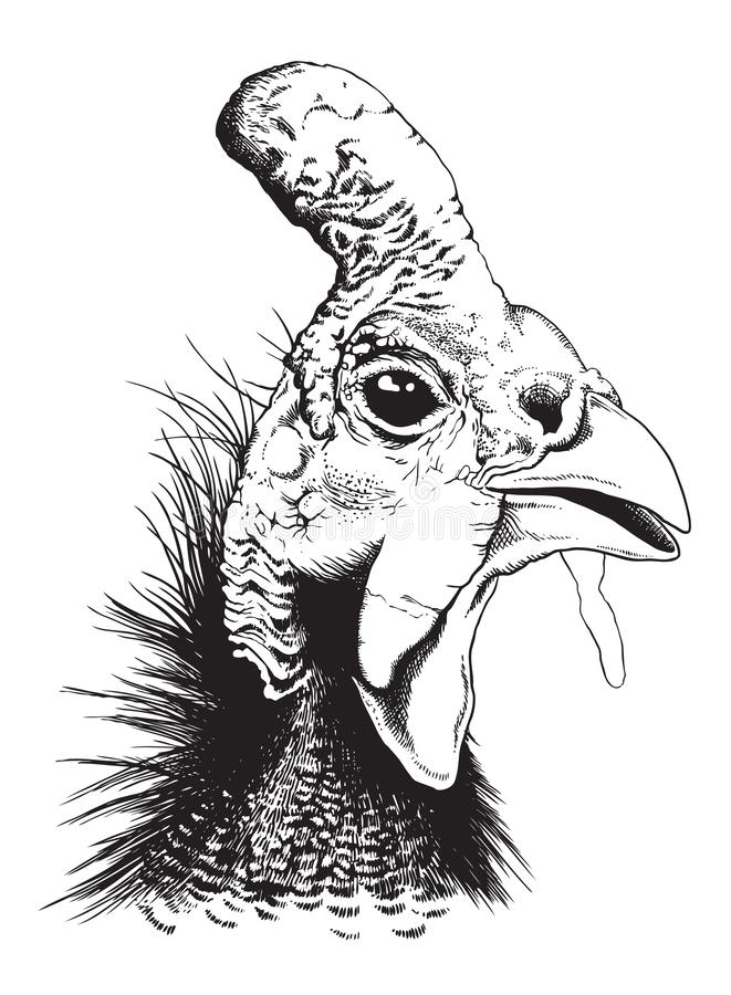 Free Vector Sketch Of A Helmeted Guinea Fowl Stock Photo - 141095680