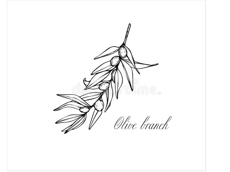 Vector sketch of olive tree branch. Drawing by hand stock photo
