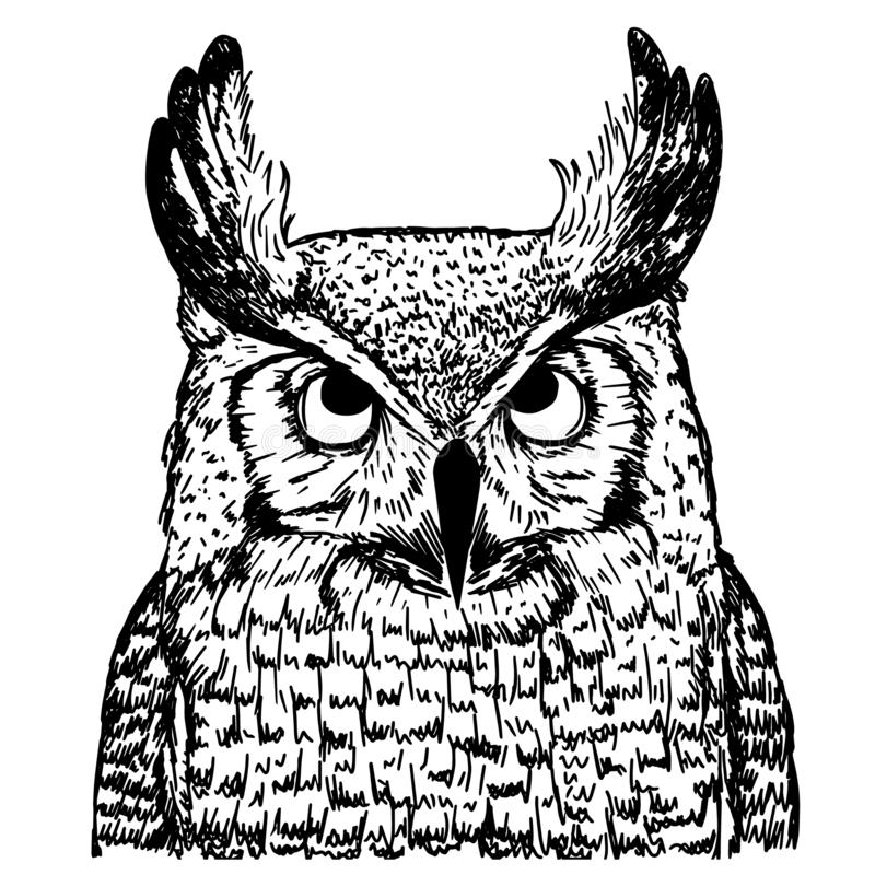 Vector sketch of owl on white background. Realistic illustration of bird royalty free illustration
