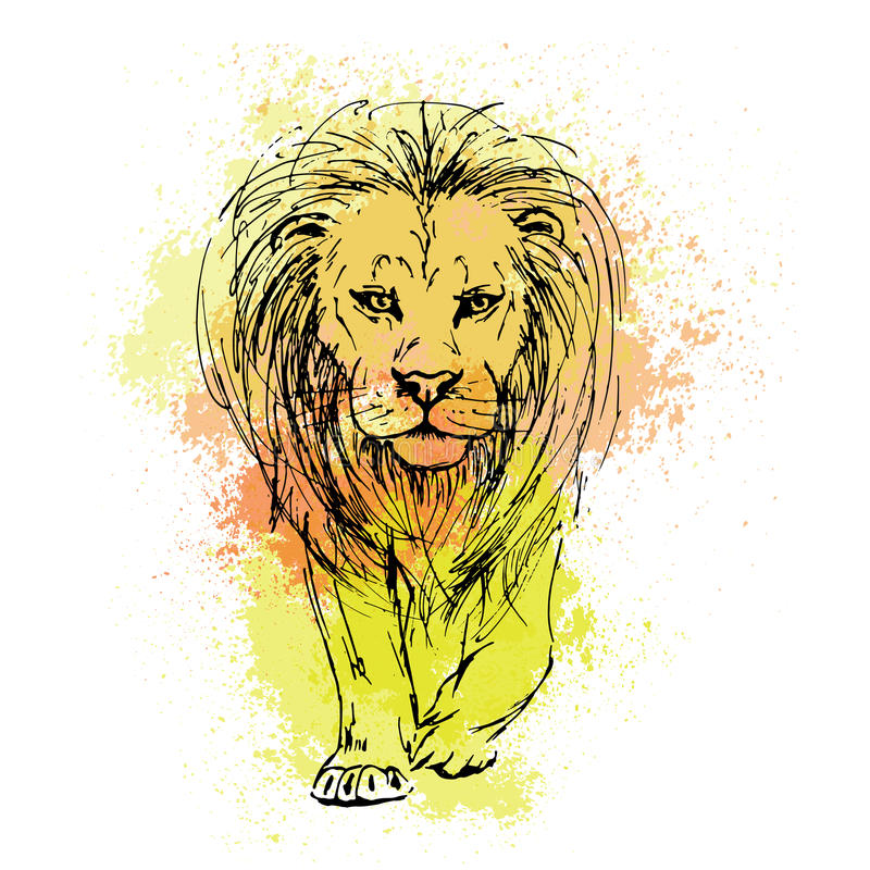 Vector sketch by pen of a lion head on a background of colored royalty free illustration